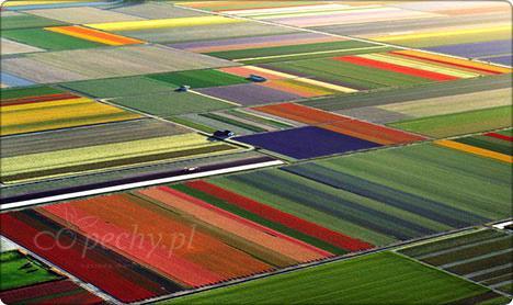 Uprawa Holandia